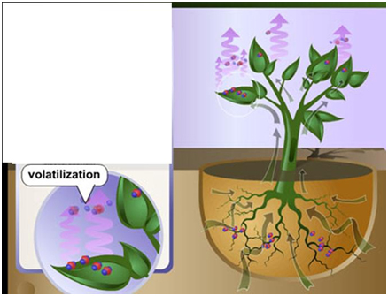 fitovolatilizacion