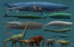 Comparación de los animales más grandes conocidos que han habitado el planeta. Créditos: http://documentalium.foroactivo.com/
